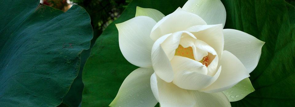 Lotus Slider