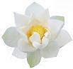 Lotus Counselling